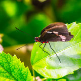 Mexican butterfly Stock Photos