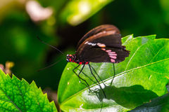 Mexican butterfly Royalty Free Stock Photo