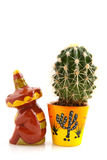 Mexican cactus Royalty Free Stock Photo