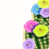 The Mexican cactus flowering  with thorns. vector illustration. The Mexican cactus flowering with thorns  vector illustration Royalty Free Stock Images