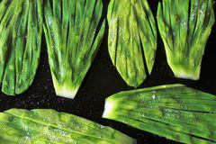 Mexican cactus leaves for cooking. With salt Stock Photography