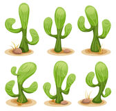 Mexican Cactus Set vector illustration
