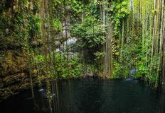 Mexican cenote Royalty Free Stock Photography