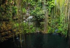 Mexican cenote. Mexican Ik Kil cenote near Chichen Itza Royalty Free Stock Photography