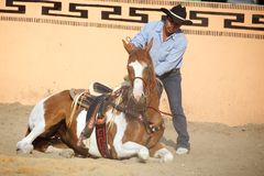 Mexican charros horseman make his horse lie down Stock Photo
