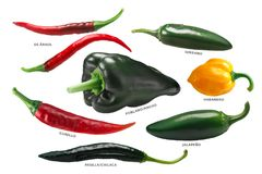 Mexican chile peppers, paths. Mexican chile peppers: Arbol, Pasilla, Guajillo, Poblano, Habanero and Jalapeno. Clipping paths royalty free stock photography