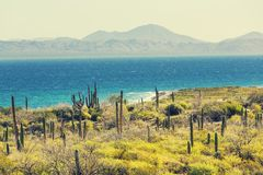 Mexican coast Royalty Free Stock Photography