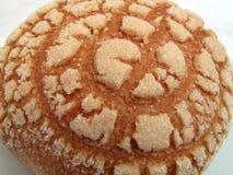 Mexican Concha Pastry Stock Photos