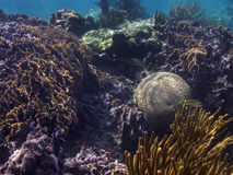 Mexican coral reef Royalty Free Stock Photo