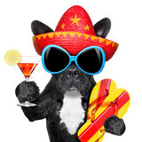 Mexican dog Stock Images