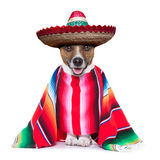 Mexican dog. With sombrero and a big poncho stock image