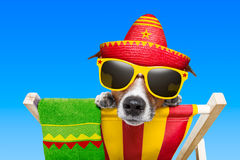 Mexican dog. On vacation relaxing on a deck chair stock photography