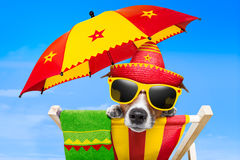 Mexican dog. On vacation relaxing on a deck chair under an umbrella stock images