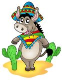 Mexican donkey with cactuses. Color illustration Stock Photography