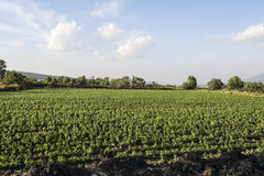Mexican farming landscape. Mexican landscape that shows crops with cloudy and blue background stock images
