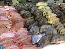 Mexican fish market. Stock Photos