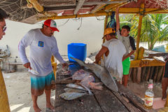 Mexican Fisherman Cleaning Fish Stock Image
