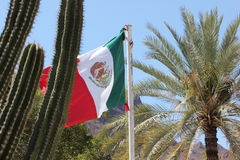 Mexican flag cactus mountain palm tree Royalty Free Stock Photography