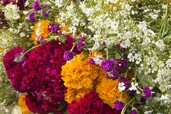 Mexican flowers. Of the traditional celebration of day of the dead Royalty Free Stock Image