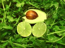 Mexican food avocado lime cilantro vegetable and fruit plant ingredients for cuisine fiesta stock images