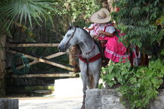 Mexican horse with girl Stock Image