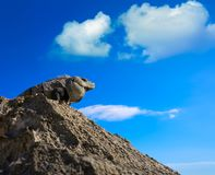 Mexican iguana in Tulum in Riviera Maya. Mexican iguana in Tulum with Caribbean sea of Riviera Maya Mexico stock images