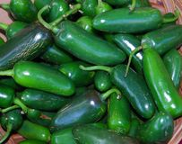 Mexican Jalapeno Chili Peppers stock photos