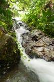 Mexican jungle cascades. Cascades in Mexican jungle of Yucatan Royalty Free Stock Photo