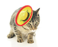 Mexican Kitty, Cha-Cha-Cha. A black and tan tabby cat wearing a Mexican sombrero. On a white background stock photos