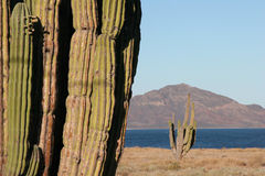 Mexican Landscapes against ocean Royalty Free Stock Photos