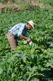 Mexican migrant field worker Stock Image