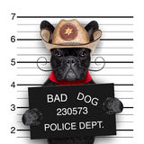 Mexican mugshot dog Royalty Free Stock Images