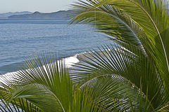 Mexican Pacific Ocean coast with palm trees Stock Photography