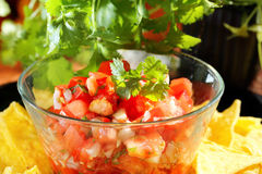 Mexican pico de gallo salsa with nachos and coriander Stock Image