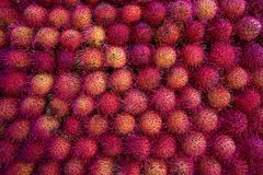 Mexican Rambutan stacked in raws. On market Stock Image