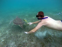 Mexican Sea Turtle underwater swim boy snorkeling Royalty Free Stock Photography