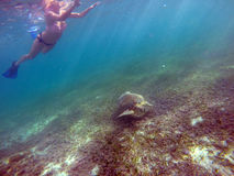 Mexican Sea Turtle underwater swimming with girl. Mexican Sea Turtle underwater swimming with a girl Royalty Free Stock Image