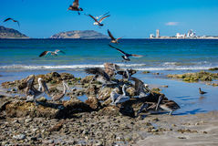 Mexican Shore Birds Stock Photo