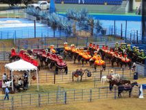 Mexican show of women on horseback. View of a demonstration show of women on horseback during a charros competition Stock Photos