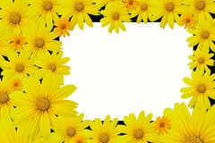 Mexican sunflower or Marigold tree frame. Background Stock Photo