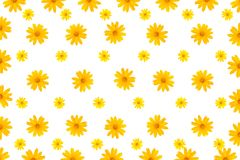 Mexican sunflower or Marigold tree frame. Background Royalty Free Stock Photos