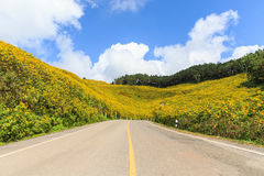 The Mexican sunflower mountian and road Royalty Free Stock Images