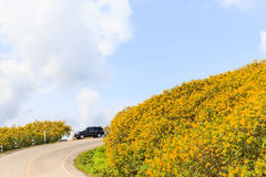 The Mexican sunflower on top mountian Royalty Free Stock Photos
