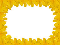 Mexican sunflower weed photo frame. Blank photo frame of Mexican sunflower weed Stock Images