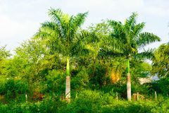 Mexican Tropical Scene. A generic tropical scene from Tuxpan, Mexico on the Gulf Coast of Mexico Royalty Free Stock Photo