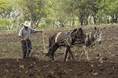Mexicansk bonde royaltyfria bilder