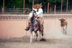 Mexicansk charrosskicklig ryttare som jagas av en tjur, TX, US royaltyfri foto