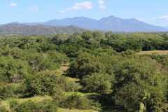 Mexicansk djungel Arkivbild