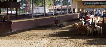 Mexicansk ryttare som binder en kalv royaltyfri foto