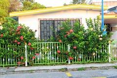 Mexicanska husdetaljer Fotografering för Bildbyråer